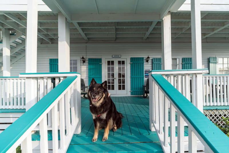Dog enjoying the St George Inn