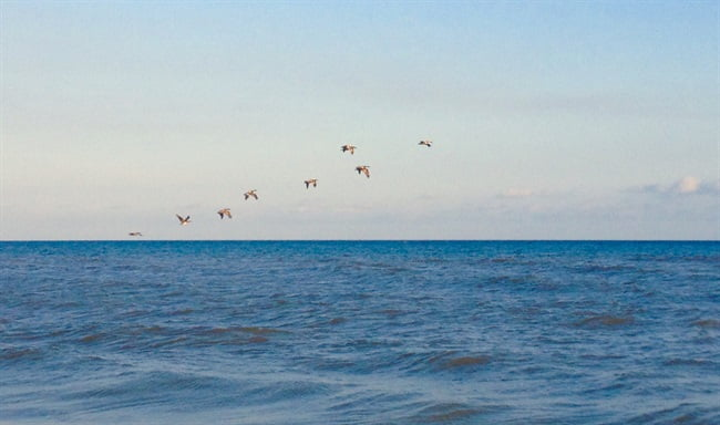 birds flying over water on st george island